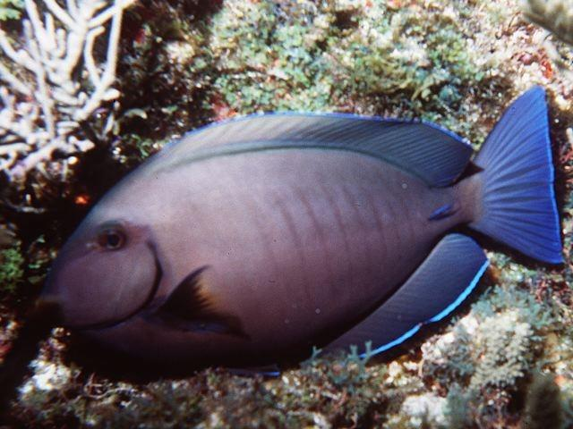Index of images static web tinyimagesdataset d doctor fish for The fish doctor