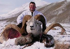 World record marco polo sheep