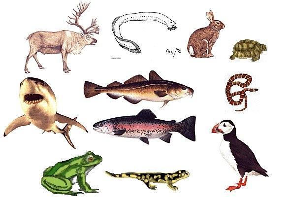 Animal language  Wikipedia