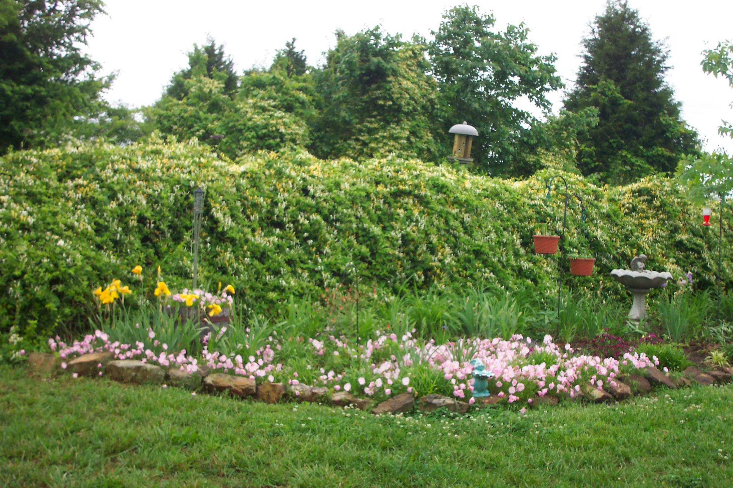 Sun C Cottage Garden